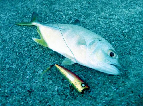 沖縄ルアー釣りクラブ